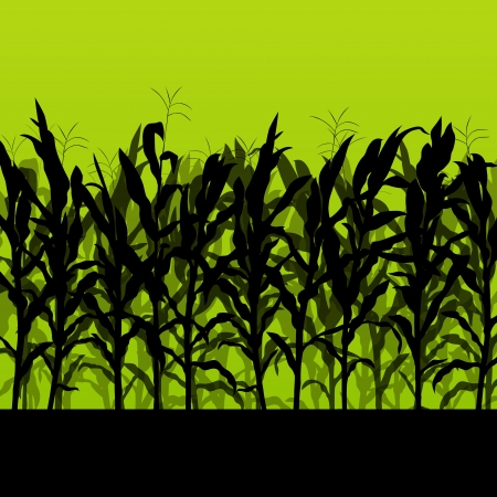 corn fields: Corn field detailed countryside landscape illustration background vector
