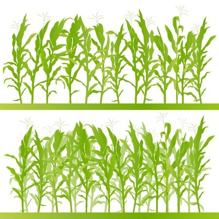 Maïsveld gedetailleerde landelijke landschap illustratie achtergrond vector Vector Illustratie