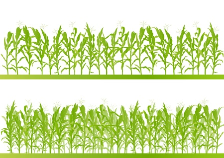 agriculture landscape: Corn field detailed countryside landscape illustration background vector