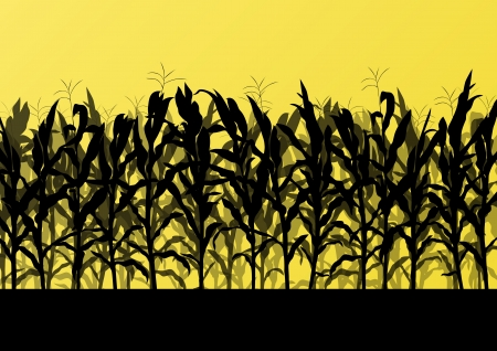 corn crop: Corn field detailed countryside landscape illustration background vector