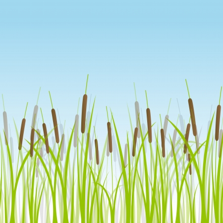 reed: Grass, reed and wild plants detailed silhouettes illustration background