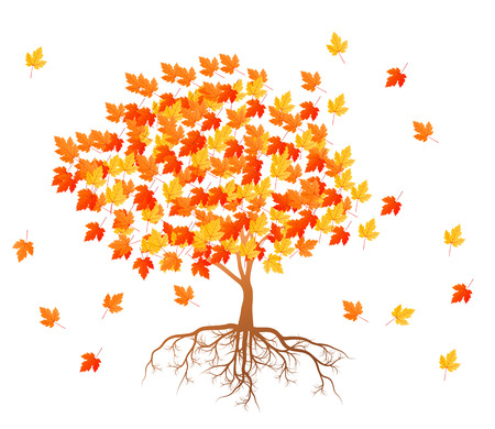 falling leaves: Maple tree autumn leaves background vector with roots