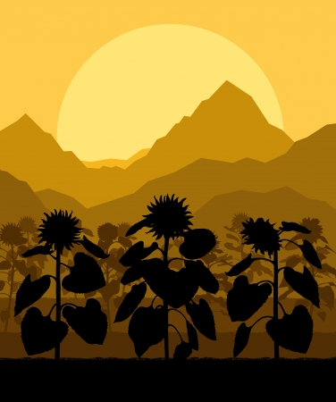 Sunflower field landscape vector background concept for poster Vector