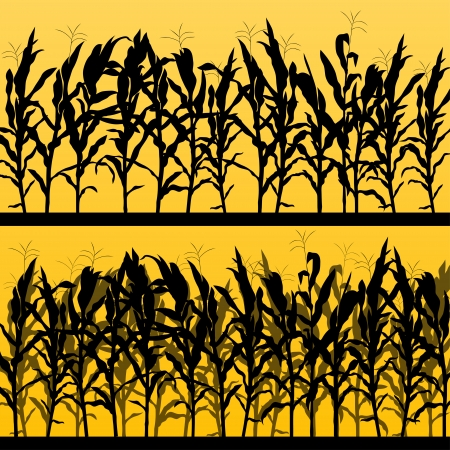 corn field: Corn field detailed countryside landscape illustration background vector