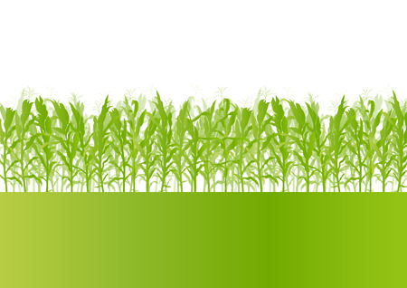 grain fields: Corn field detailed countryside landscape ecology illustration background vector