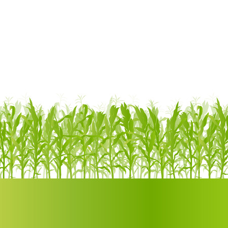 corn fields: Corn field detailed countryside landscape ecology illustration background vector