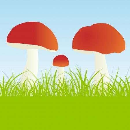 Mushrooms vector background concept Vector