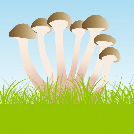 agaric: Group of agaric honey fungus vector background