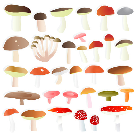 Mushrooms collection set vector background concept Stock Vector - 22893900