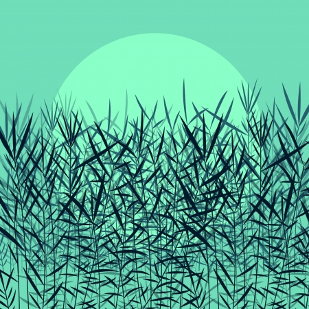 reed: Grass, reed and wild plants detailed silhouettes illustration background vector in moonlight