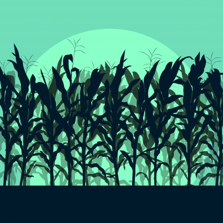 grain field: Corn field detailed countryside landscape illustration background vector in moonlight