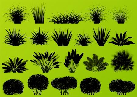 이국적인 정글 숲 잔디, 갈대, 종려 나무 야생 식물 자세한 실루엣 그림 컬렉션 배경 벡터