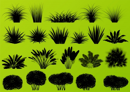 wild grass: Exotic jungle bushes grass, reed, palm tree wild plants detailed silhouettes illustration collection background vector
