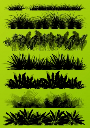 exotic plant: Tropical exotic jungle grass and plants detailed silhouettes landscape illustration collection background vector Illustration
