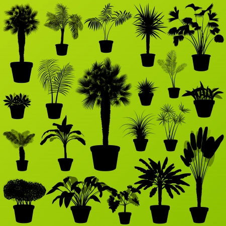 Exotic jungle bushes grass, reed, palm tree wild plants set vector background concept house plants for poster Stock Vector - 24474720