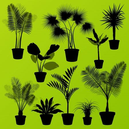 Exotic jungle bushes grass, reed, palm tree wild plants set vector background concept house plants for poster Stock Vector - 24474724