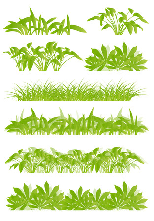 seasonal forest: Tropical exotic jungle grass and plants detailed silhouettes landscape illustration collection background vector green concept