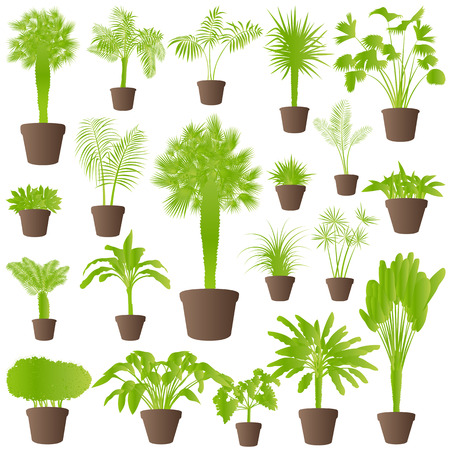 Exotic jungle bushes grass, reed, palm tree wild plants set vector background concept house plants for poster Stock Vector - 24474882