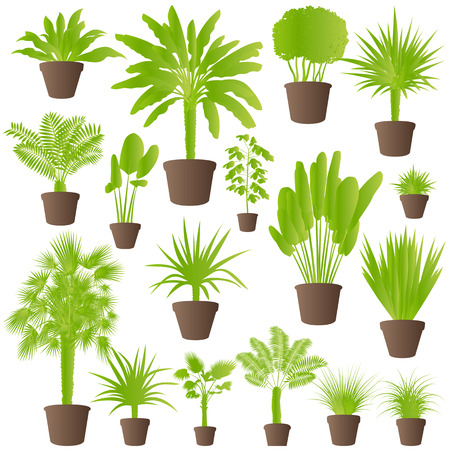 cutting grass: Exotic jungle bushes grass, reed, palm tree wild plants set vector background concept house plants for poster