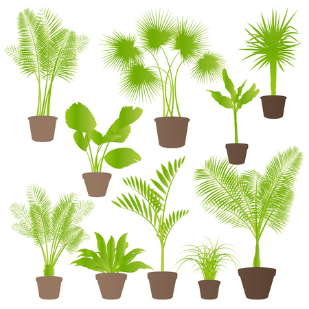 Exotic jungle bushes grass, reed, palm tree wild plants set vector background concept house plants for poster Stock Vector - 24475000