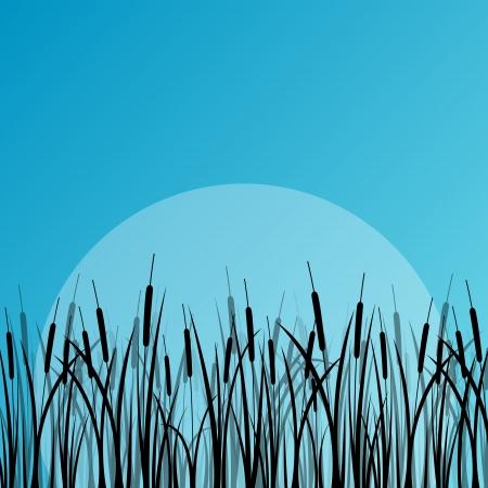 plantes aquatiques: plantes aquatiques sauvages silhouettes d�taill�es ext�rieure illustration de fond