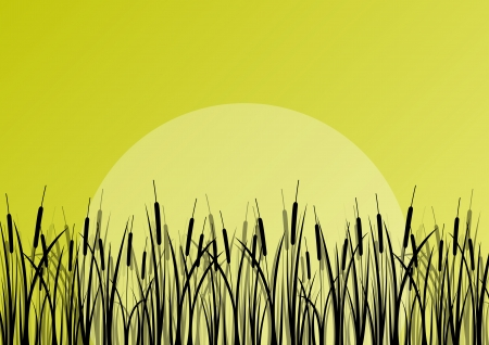 reeds: Lake reed and wild water plants detailed silhouettes