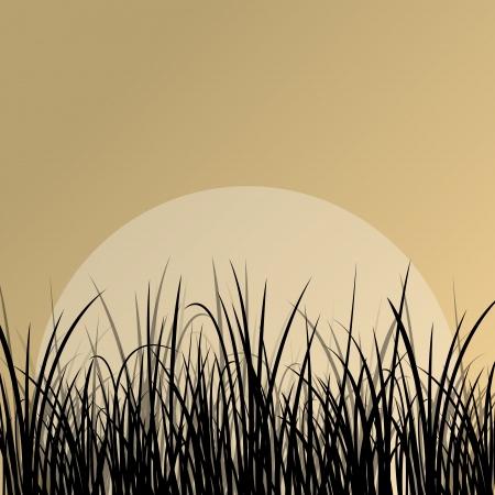 plantes aquatiques: Lac roseau et de plantes aquatiques sauvages silhouettes d�taill�es