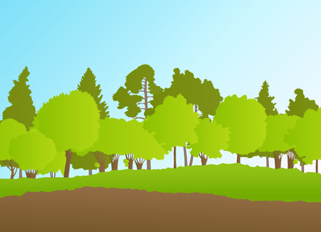Forest in summer vector background landscape for poster Illustration