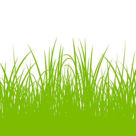 hay: Grass, wild plants detailed silhouettes illustration background vector for poster