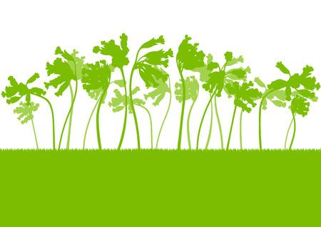 cowslip: Cowslip flower landscape vector background spring concept for poster