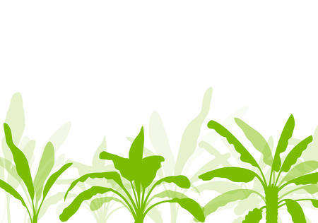 herbaceous: Banana tree, organic ecology background for poster