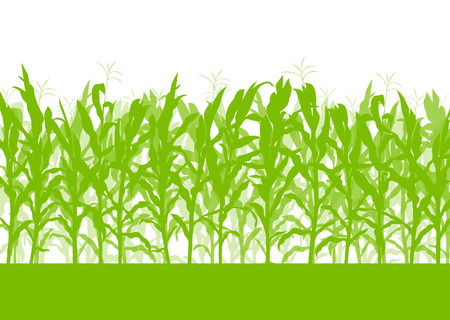 grain field: Corn field vector background ecology green concept for poster