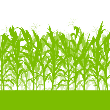 corn fields: Corn field vector background ecology green concept for poster