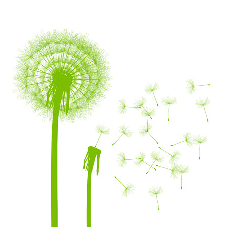 snort: Dandelion seeds blowing away green ecology and time passing concept background vector
