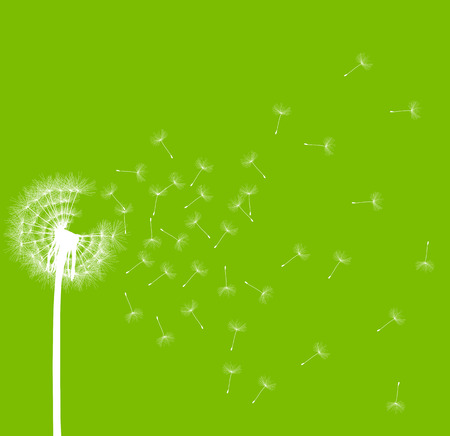 time passing: Dandelion seeds blowing away green ecology and time passing concept background vector