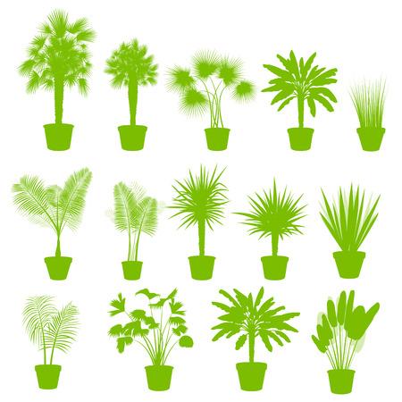 indoor garden: House indoor plants in pots set vector background green concept for poster
