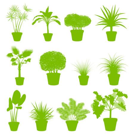 옥내의: 포스터 냄비에 하우스 실내 식물 설정 벡터 배경 녹색 개념 일러스트
