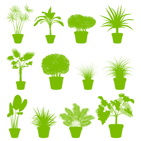 green plants: House indoor plants in pots set vector background green concept for poster