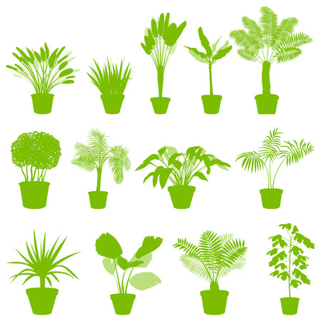 옥내의: House indoor plants in pots set vector background green concept for poster
