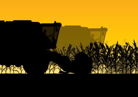 corny: Corn field harvesting with combine harvester yellow abstract rural autumn vector background Illustration