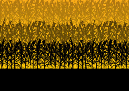 biofuel: Corn field abstract rural autumn biomass biofuel vector background Illustration
