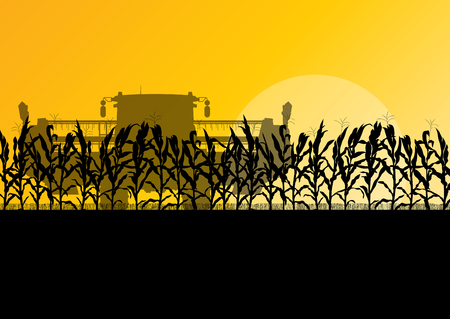 grain fields: Corn field harvesting with combine harvester yellow abstract rural autumn vector background Illustration