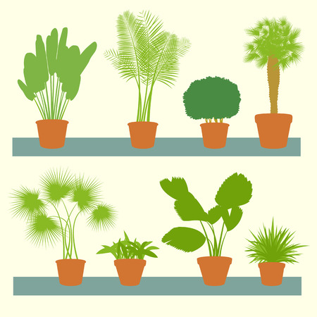 Home plants, green palms, bushes in pots set vector background illustration collection