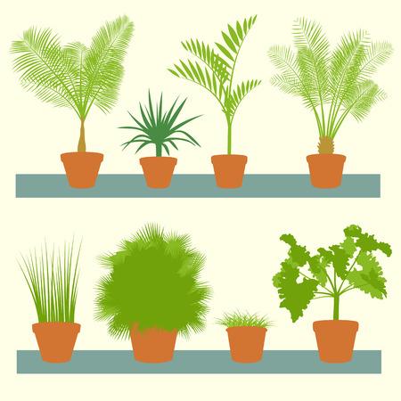 green plants: Home plants, green palms, bushes in pots set vector background illustration collection