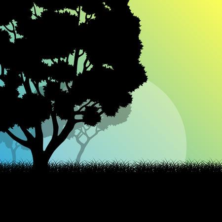 walk through: Forest trees landscape sunrise vector background illustration mystery concept
