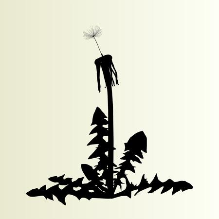 springtime: Abstract dandelion background vector illustration springtime concept