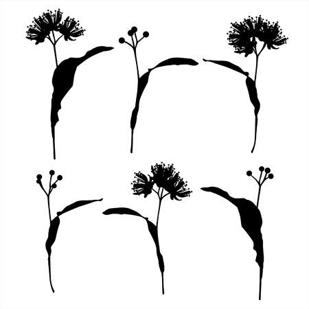 linden: Linden flowers set background vector