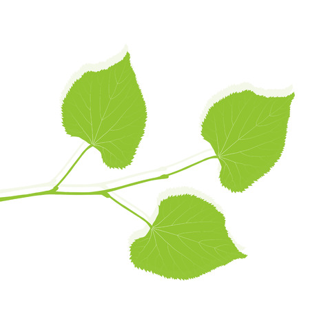 ecology background: Green leaf ecology background vector environmentally friendly illustration