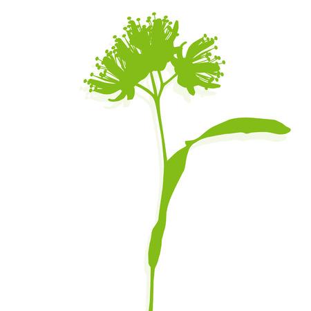 linden flowers: Linden flowers ecology background vector abstract illustration Illustration
