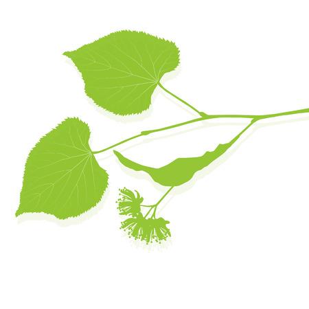 Linden flowers ecology background vector abstract illustration Illustration